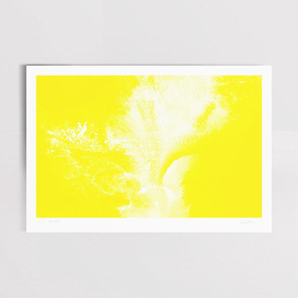 yellow_nr3_Mockup